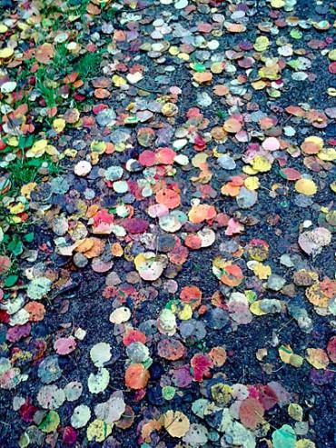 Löv Hea